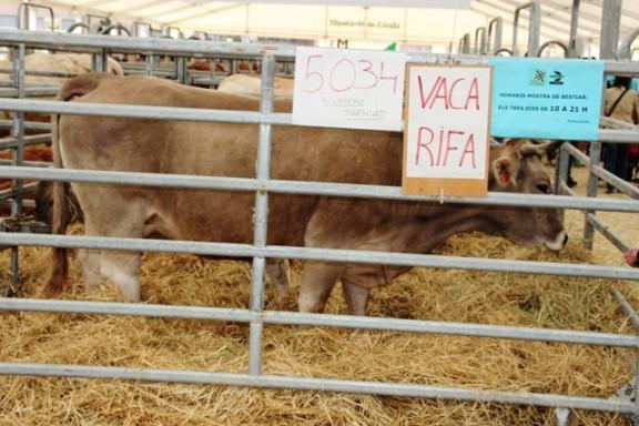 Sorteig Vaca i Vedella 2014