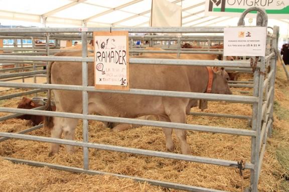 Sorteig Vaca i Vedella 2016