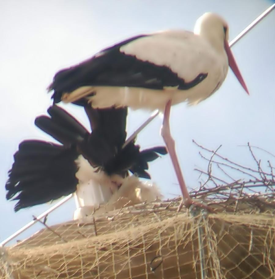 02 Cigonya atrapada eix motor Bye Bye Bird Catedral